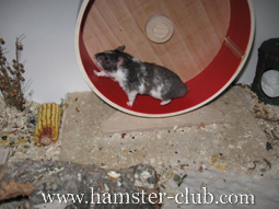 German Hamster Housing