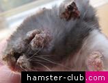 Hamster Mange