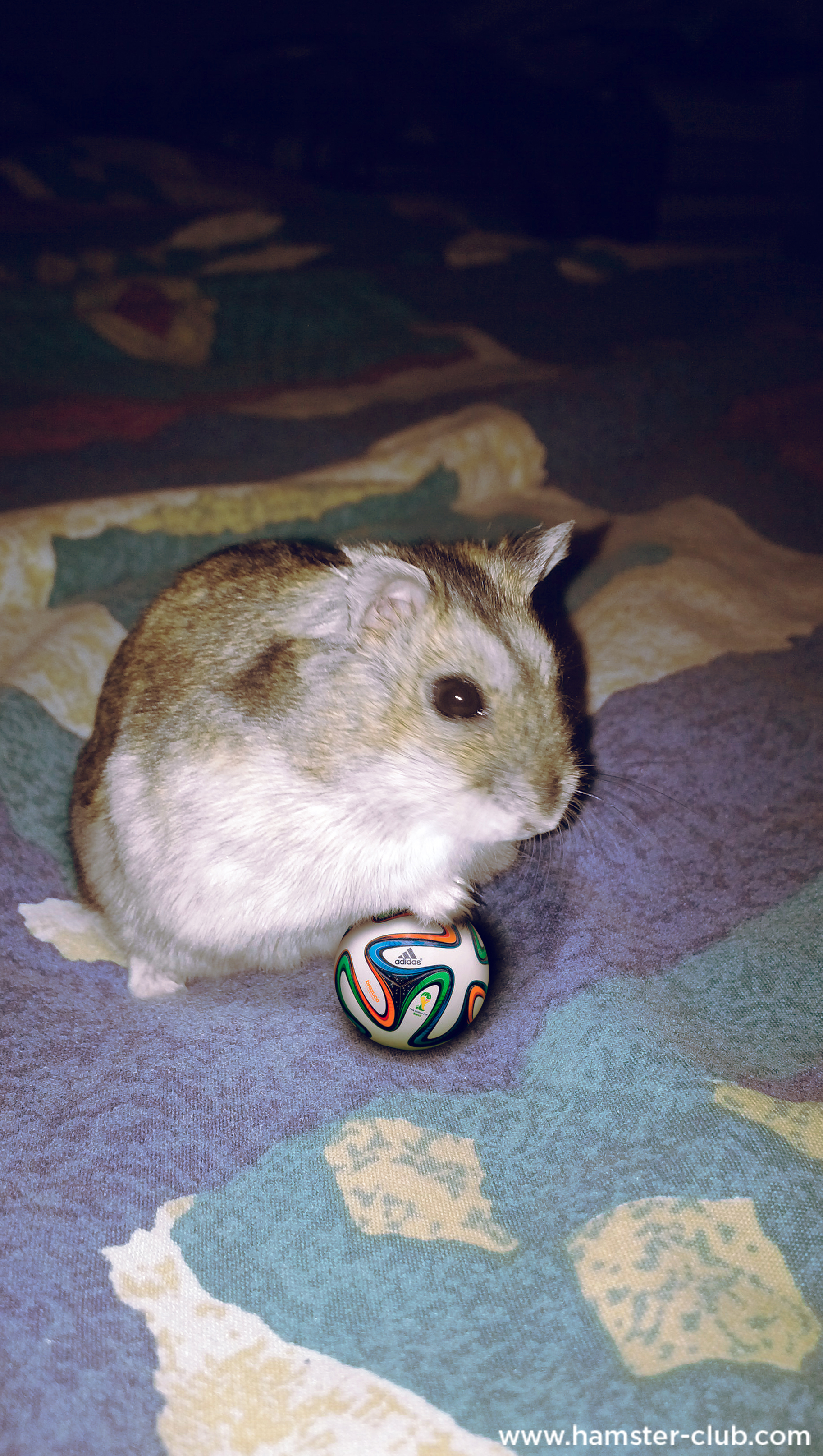 Hamster Brazil World Cup