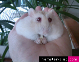 Harmful Hamster Antibiotics