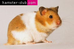 Hamster Club Newsletter