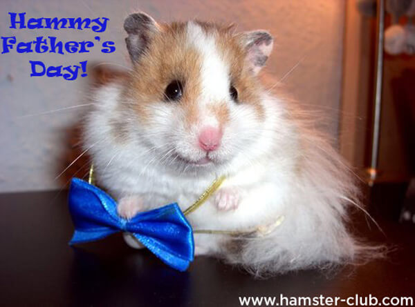Hamster Father's Day