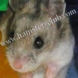 Hamster Club :: Health