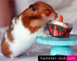 Free hamster birthday e-card