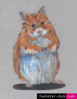 Hamster Drawing
