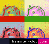 Hamster Creativity Picture