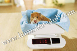 Hamster Club Ebook