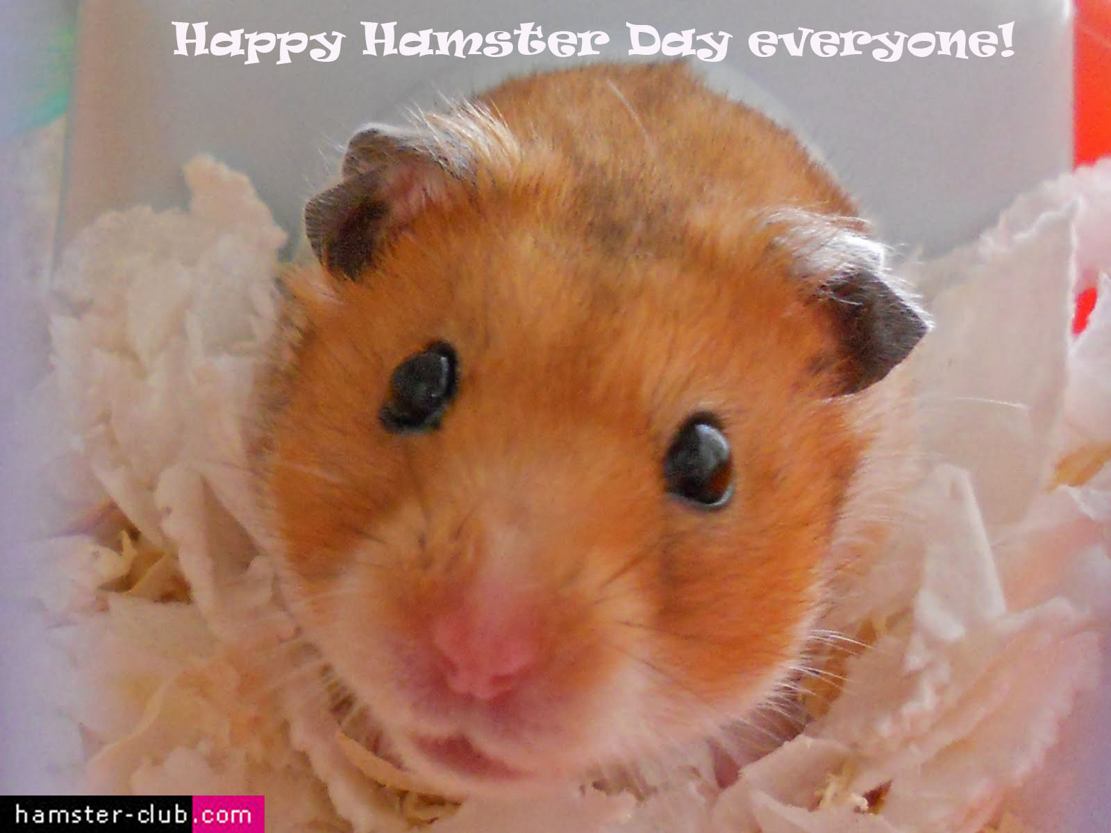 World Hamster Day