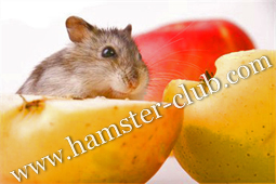 Do Hamsters see in colour?