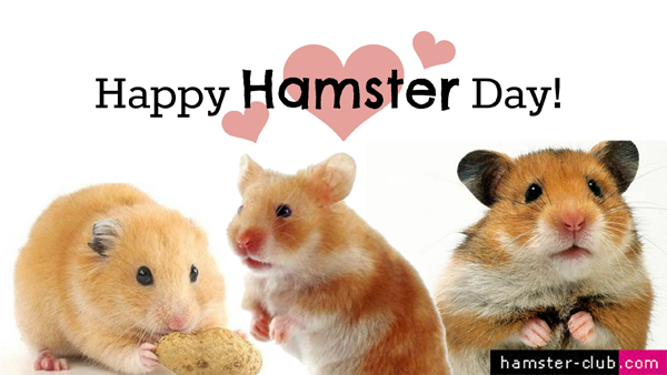 Hamster Day