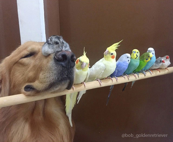 Hamster befriends dog and 8 birds