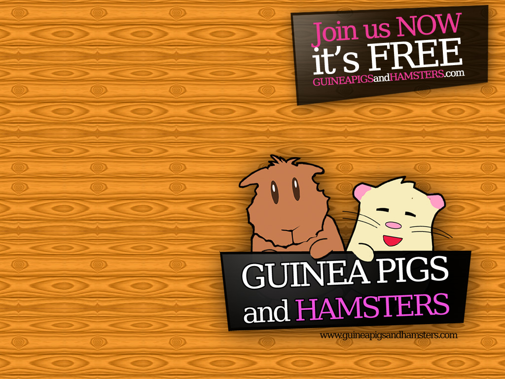 Guinea Pigs and Hamsters Wallpaper